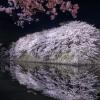 お花見スポットMyベスト5!愛知県(名古屋・春日井など)桜情報を紹介