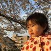 桜開花予報2019!名古屋の開花は3/22、満開は4/3頃【愛知県の名所を紹介】