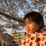 桜開花予報2019!名古屋の開花は3/17、満開が3/25頃?