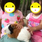 東山動物園の駐車場でベビーカー持参の穴場を3つ紹介!