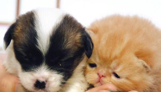 動物のかわいい&おもしろTwitter動画まとめ!猫や犬のかわいい赤ちゃんに癒やされたい!